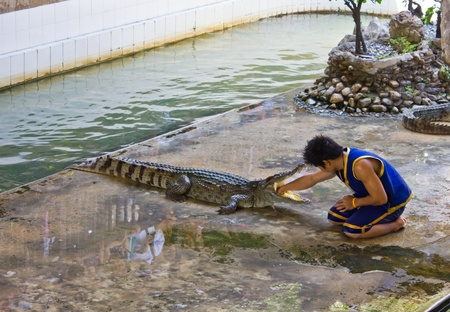 Shows reached the mouth of crocodile, a show about the dangers of a crocodile, the crocodile farm,Nakhonprathom Thailand