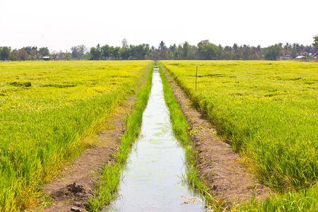watercourse: Watercourse between the rice fields