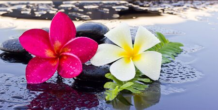 Spa stones and frangipani flower. photo