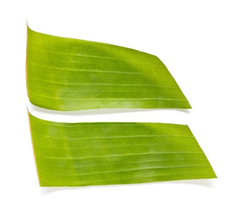 Banana leaves on a white background. 版權商用圖片