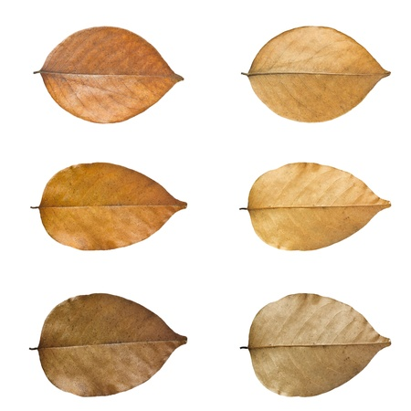 Dry leaves set isolated on white background. photo