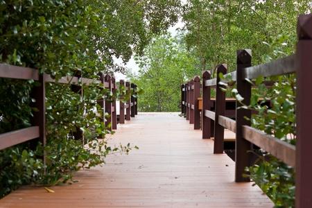 Wooden walkway inMangrove forest Stock Photo - 22096158
