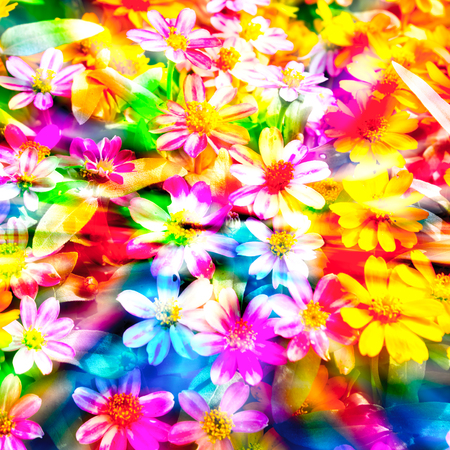 colorful flowers: colorful flower.