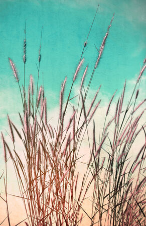 Vintage flower of the grass. photo
