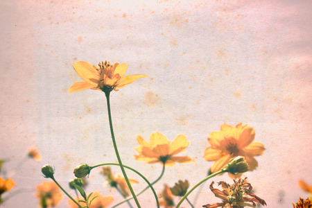 Vintage yellow Flowers on old paper. photo