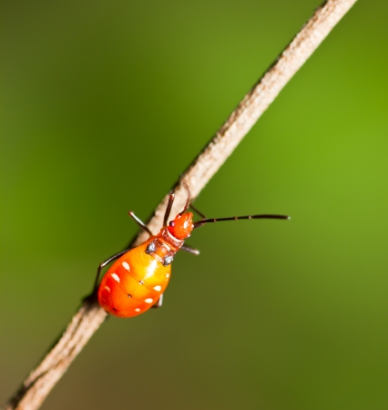 Orange Insect photo