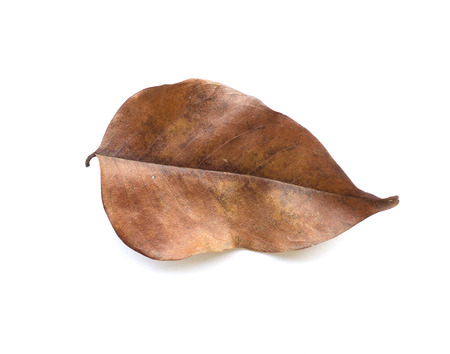 Dry leaves on white. photo