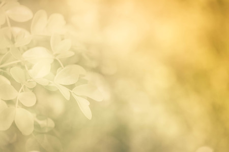 focus on background: Soft focus natural brown background.
