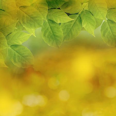 feuillage: Soft focus vert naturel et sur fond jaune.