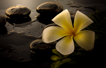 black stones: Black spa stones and white frangipani.