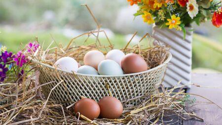 Organic multi-color eggs