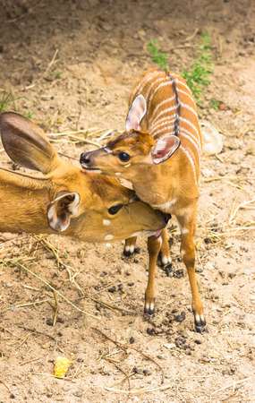 mother and baby deer: Mother deer and fawn