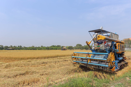harvesters: combine harvesters the farmers Thailand Stock Photo