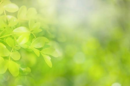 소프트 포커스 자연 녹색 배경입니다. 스톡 콘텐츠