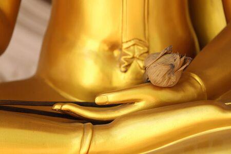 buddha hand: Dried lotus on golden Buddha hand.