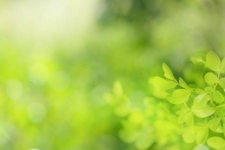 Soft focus sfondo verde naturale. Archivio Fotografico - 49127708