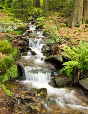wasser: Bach im Wald