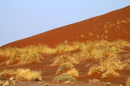 rote: rote Sandd�ne mit Grasb�schel Stock Photo