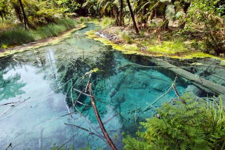 wasser: Neuseeland, T�mpel im Redwood Forest