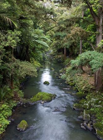 wasser: Neuseeland, Bach im Wald Stock Photo