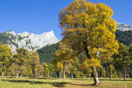 greater: Tyrol, Greater Ahornboden