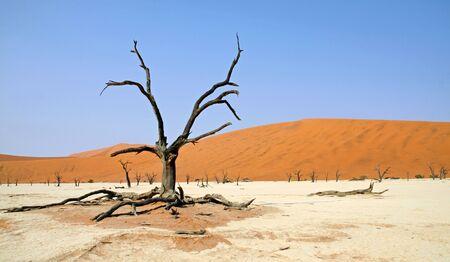 Namibia, Sossusvlei, Dead Vlei
