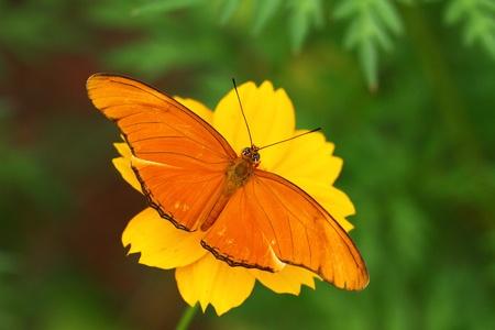 Julia Butterfly photo