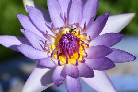 water lily photographed in natural light photo