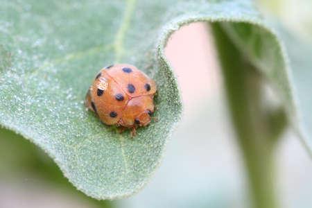 lady bug Stock Photo - 14830822