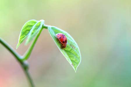 lady bug Stock Photo - 14935416