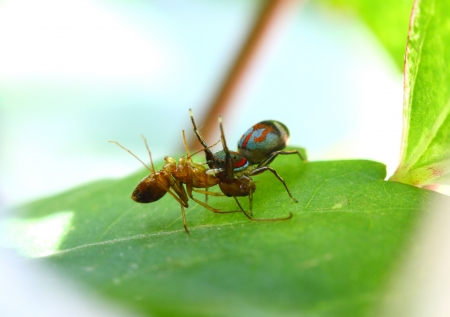 spider eating ant Stock Photo - 14988732