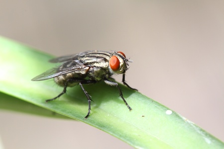 close up of a fly photo