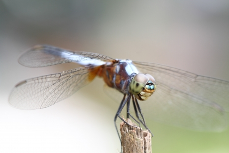 Dragonfly in nature  Stock Photo - 15730304