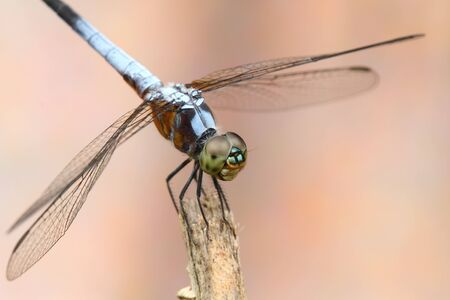 Dragonfly in nature Stock Photo - 15730303