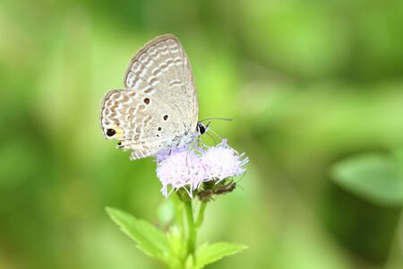 lue Butterfly  photo