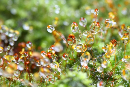 Closeup moss
