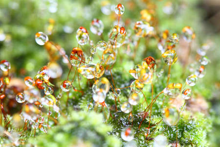 Closeup moss Stock Photo - 17524958