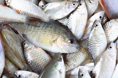 fresh fish Stock Photo - 17630397