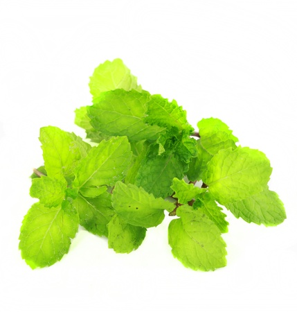 mint leave on white background  Stock Photo