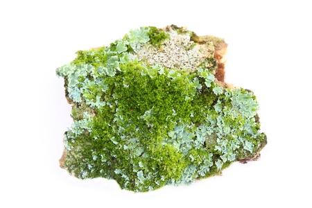 Closeup lichen  photo