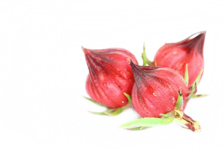 Roselle fruits  photo