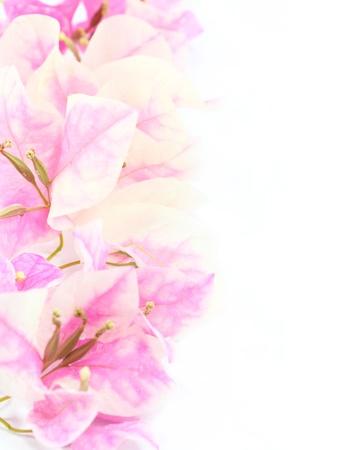 paper flower  photo