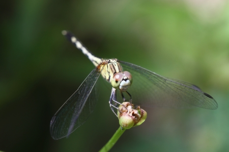 Dragonfly in nature Stock Photo - 20315342