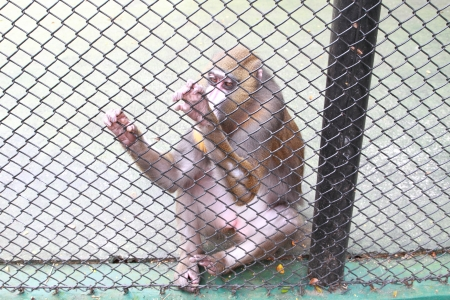 monkey in the cage Stock Photo - 21572722