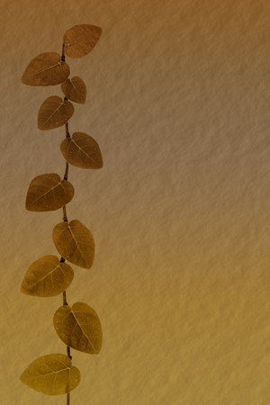 climbing fig: textured paper with climbing fig leaves