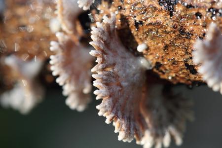 fungus photo