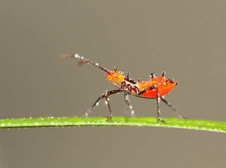 aphid: Aphid on a leaf