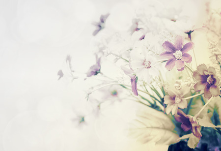pretty flowers blooming in soft and blur style for background Stock Photo