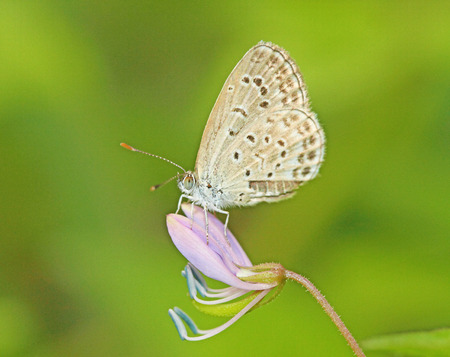 macro photography: blue butterfly
