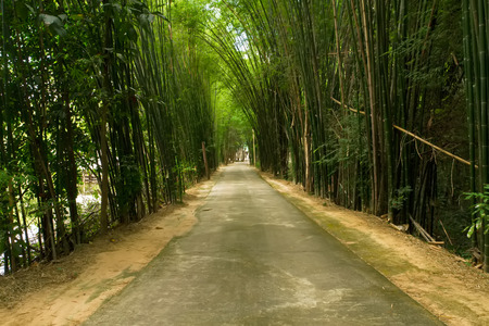Road with Bamboo photo
